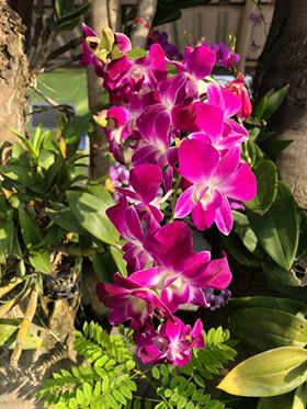 Orchid with fern.