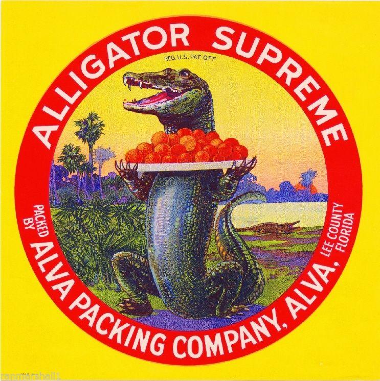 """Alligator Supreme."" Alva Packing Company, Lee County. Florida. Vintage."