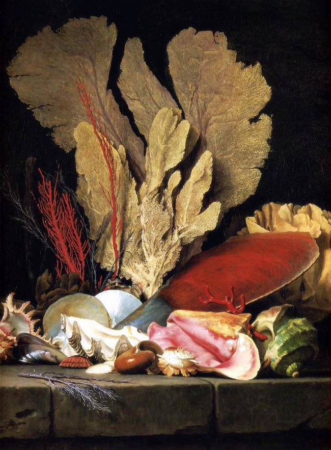 """""""Still-Life with Tuft of Marine Plants, Shells and Corals."""" 1769."""