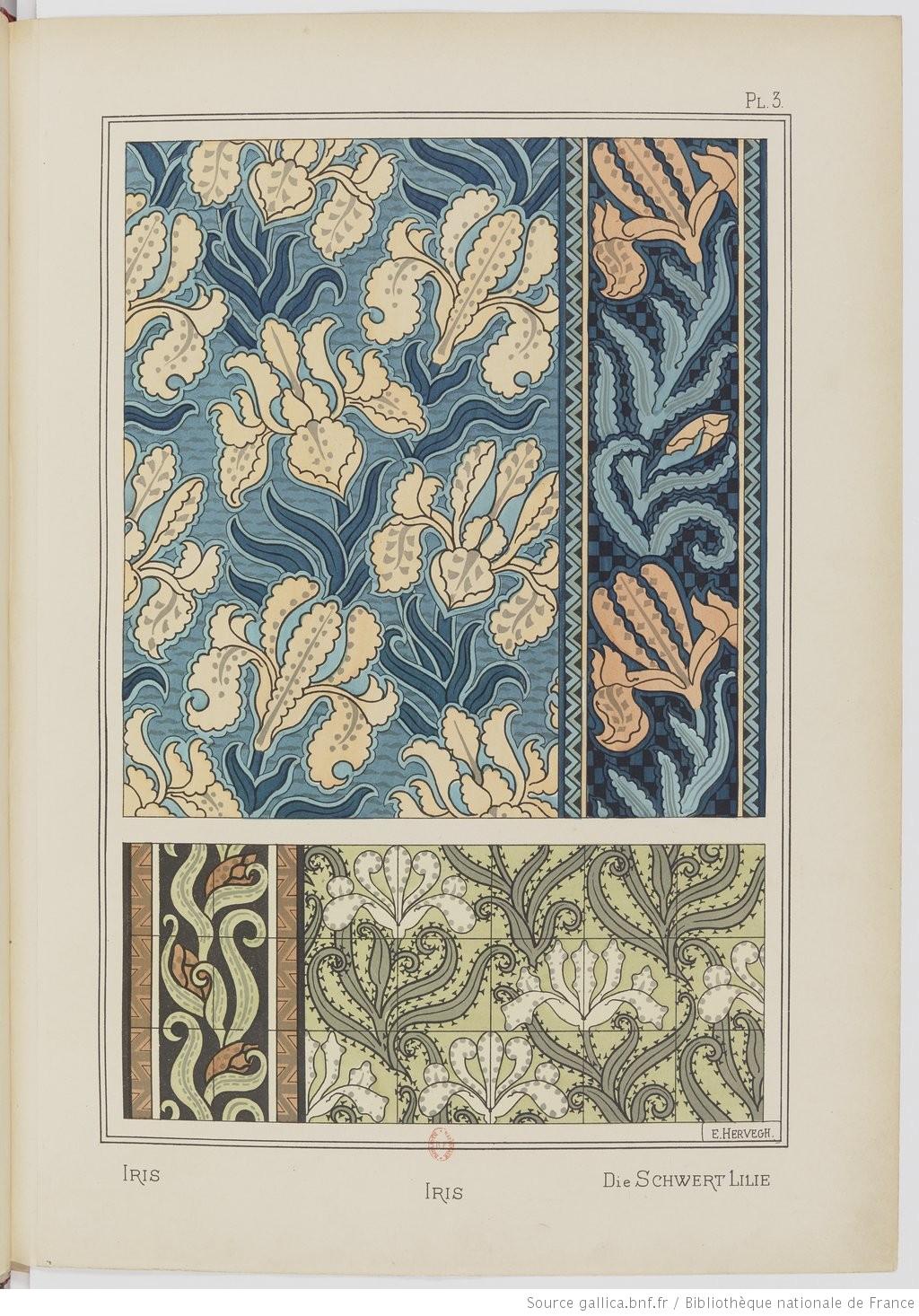 """""""The Sword Iris."""" Plate V. Image 14."""