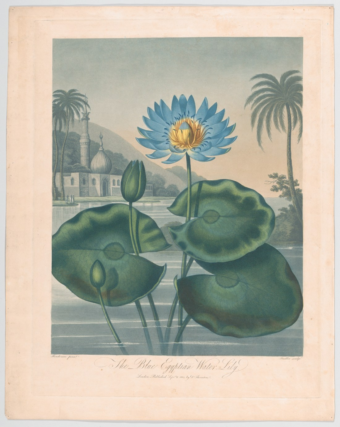 """The Blue Egyptian Water Lily."""
