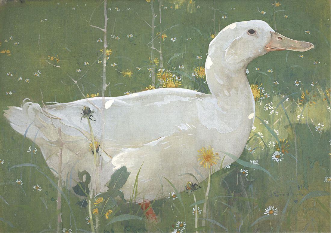 """The White Drake."" 1895."