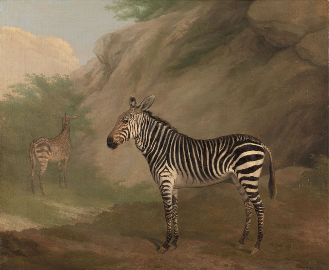 """Zebra."" 1803."