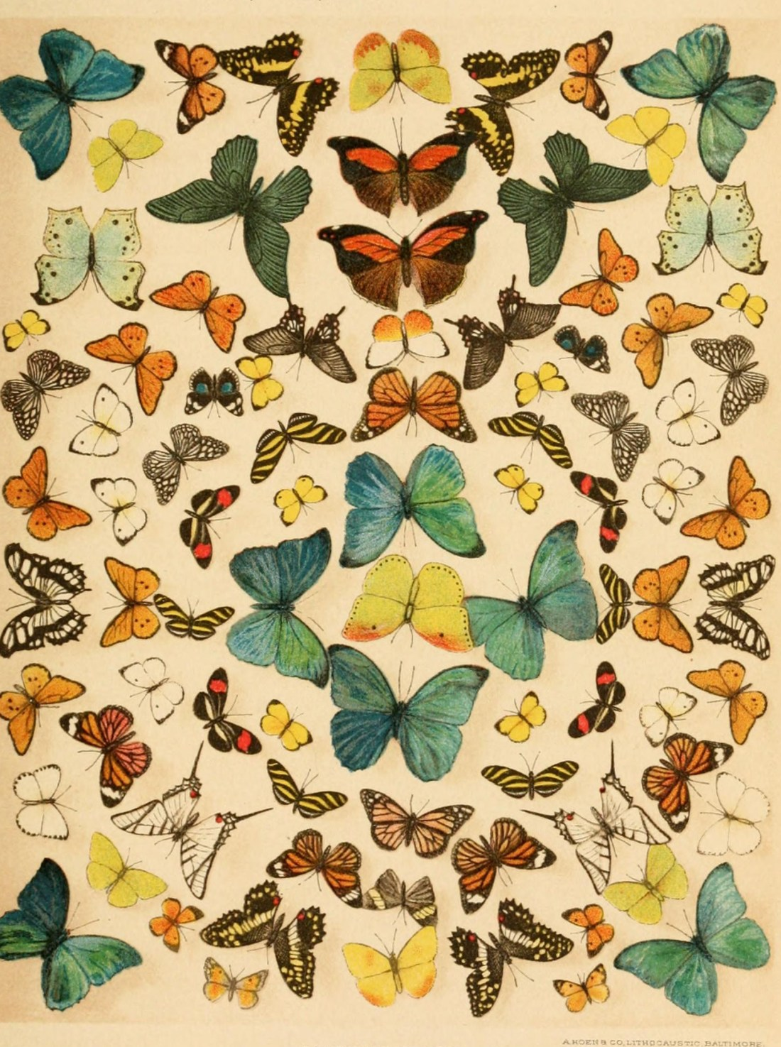 """""""Butterflies."""" Paine. Page 831. Plate X."""