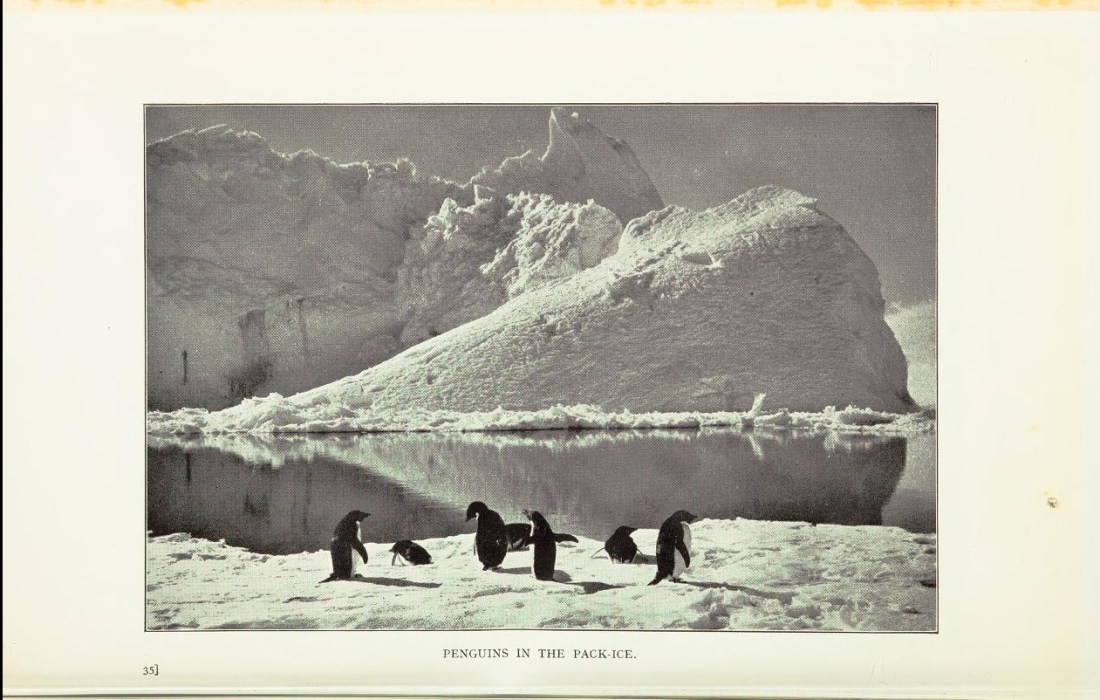"""""""Penguins in the Pack Ice."""""""