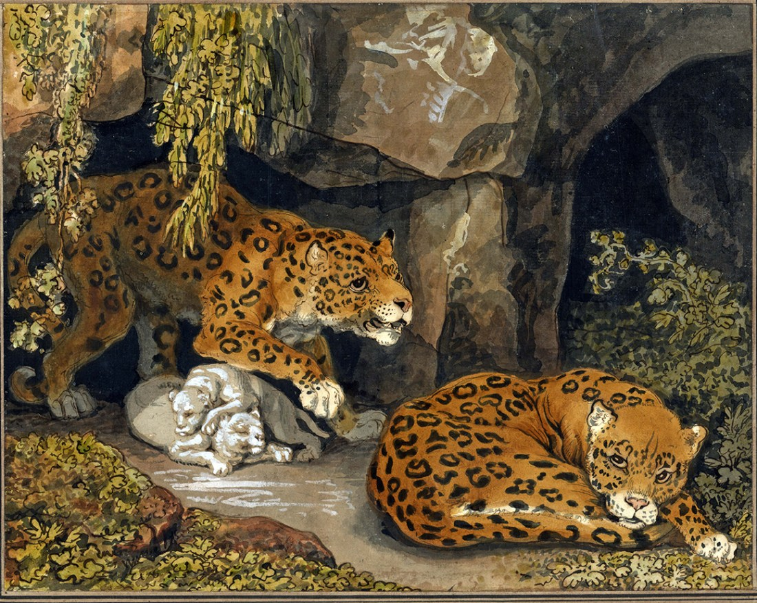 """A leopard and a leopardess with their cubs at the entrance to a cave."""