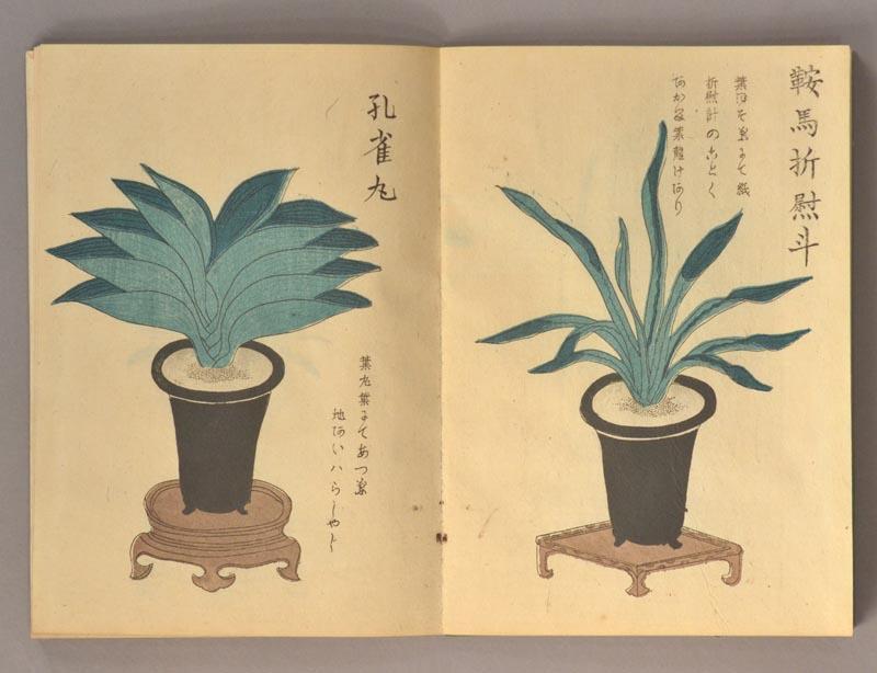 Fan. 1883. Image © 2019 Boston Book Company. Fair use license. via https://www.rarebook.com/pages/books/90403/inoue-gensuke/omoto-chasei-chukei