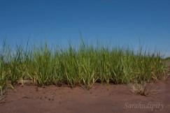 Mud and GrassWM