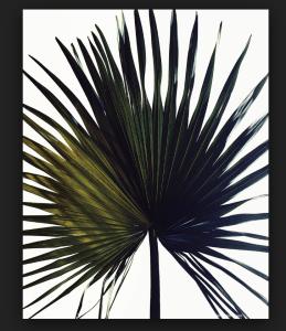 ULNY APSU Leaf Image