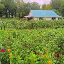 Renfrow Farms