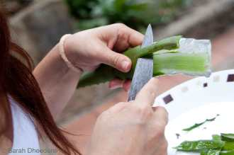 The aloe vera and its magical properties.