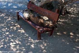 Having a rest