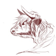 cow_2