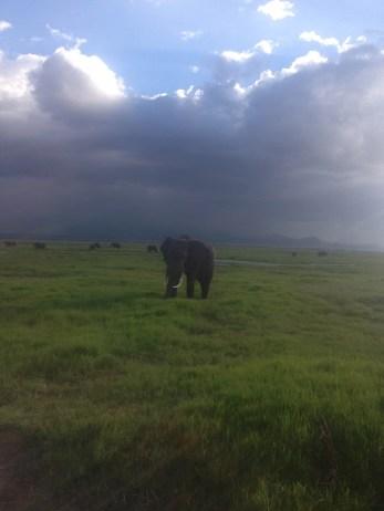 An elephant in Amboselli