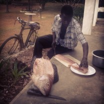 Fresh fish filleted on our doorstep