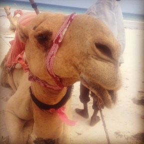 George the camel