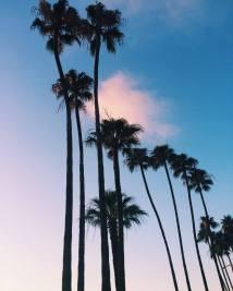 Palmtrees ♥