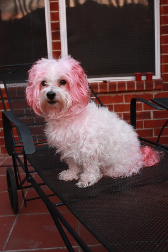 Kool Aid Hair Dye DIY Sarah Forshaws Blog
