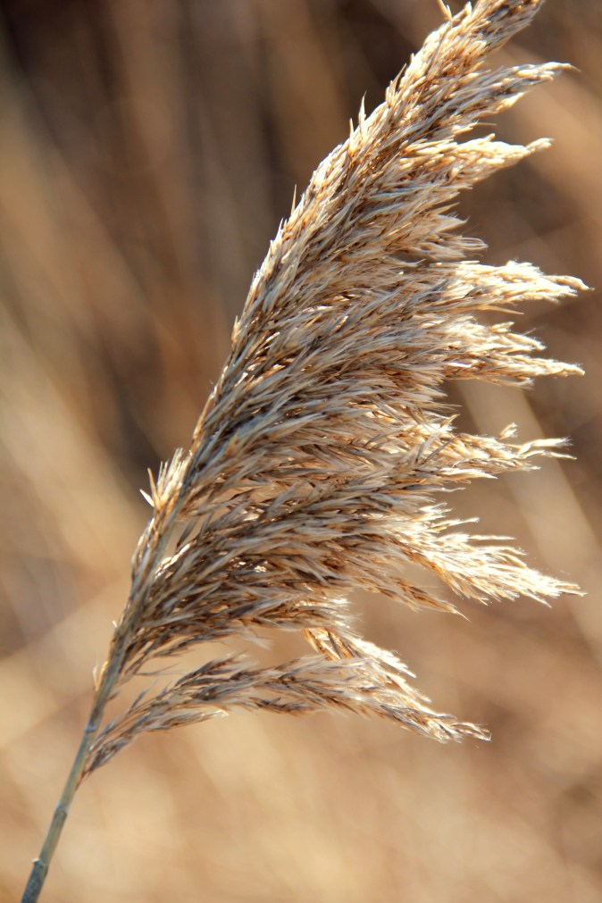 Sarah Hale Folger. wheatgrass