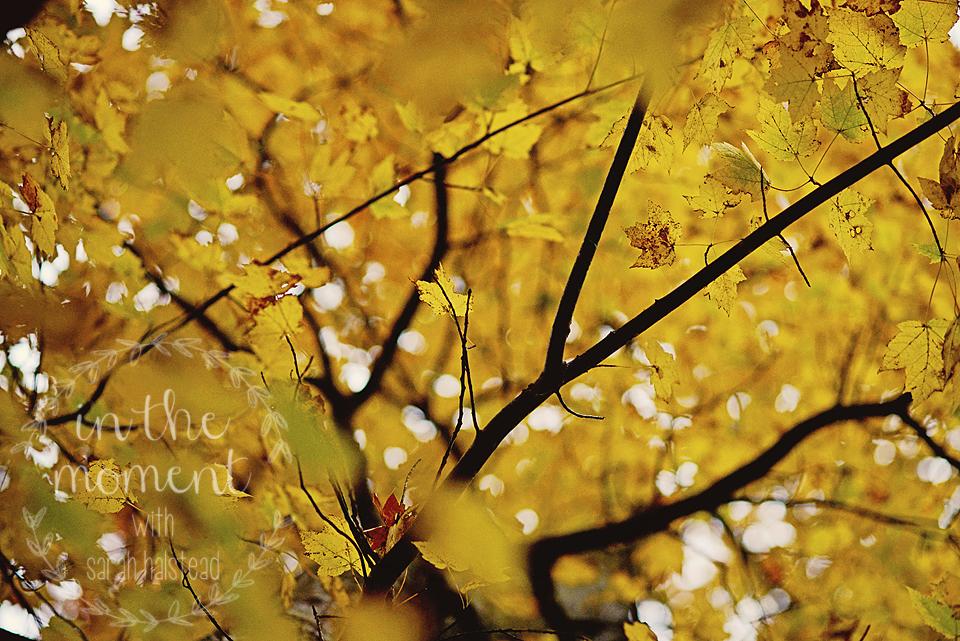 13. Autumn Harvest