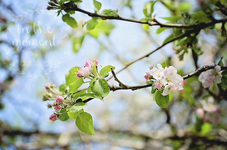 8. Spring Fever