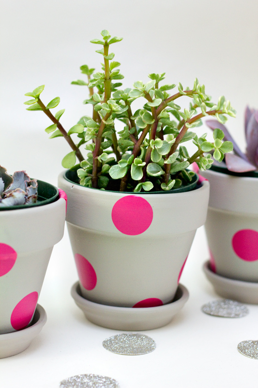 easy polka dot painted terracotta pots