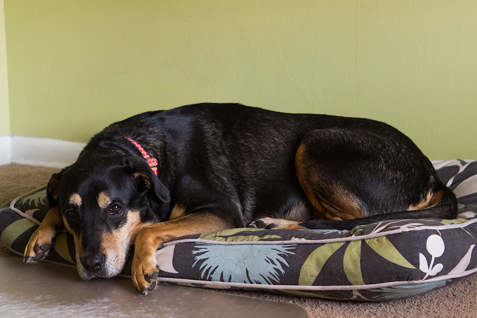 Floral dog bed with removable and washable cover by Jax and Bones.