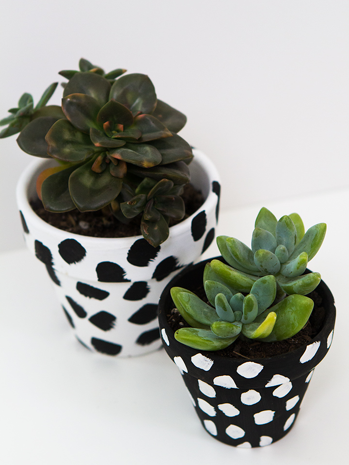 Clay Pots Upcycle Painted Terracotta Pots Polka Dots Black and White with Succulents