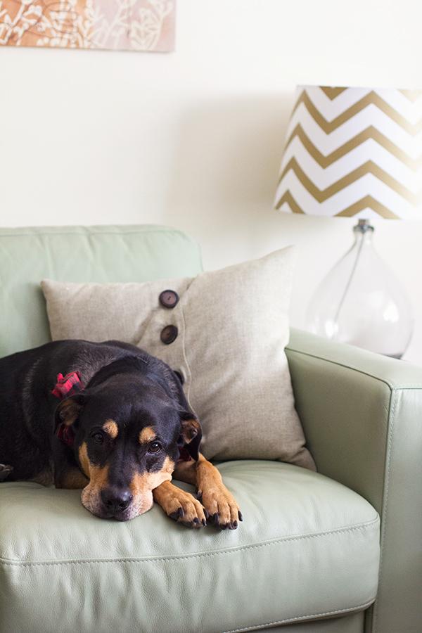 Remembering #darcydog