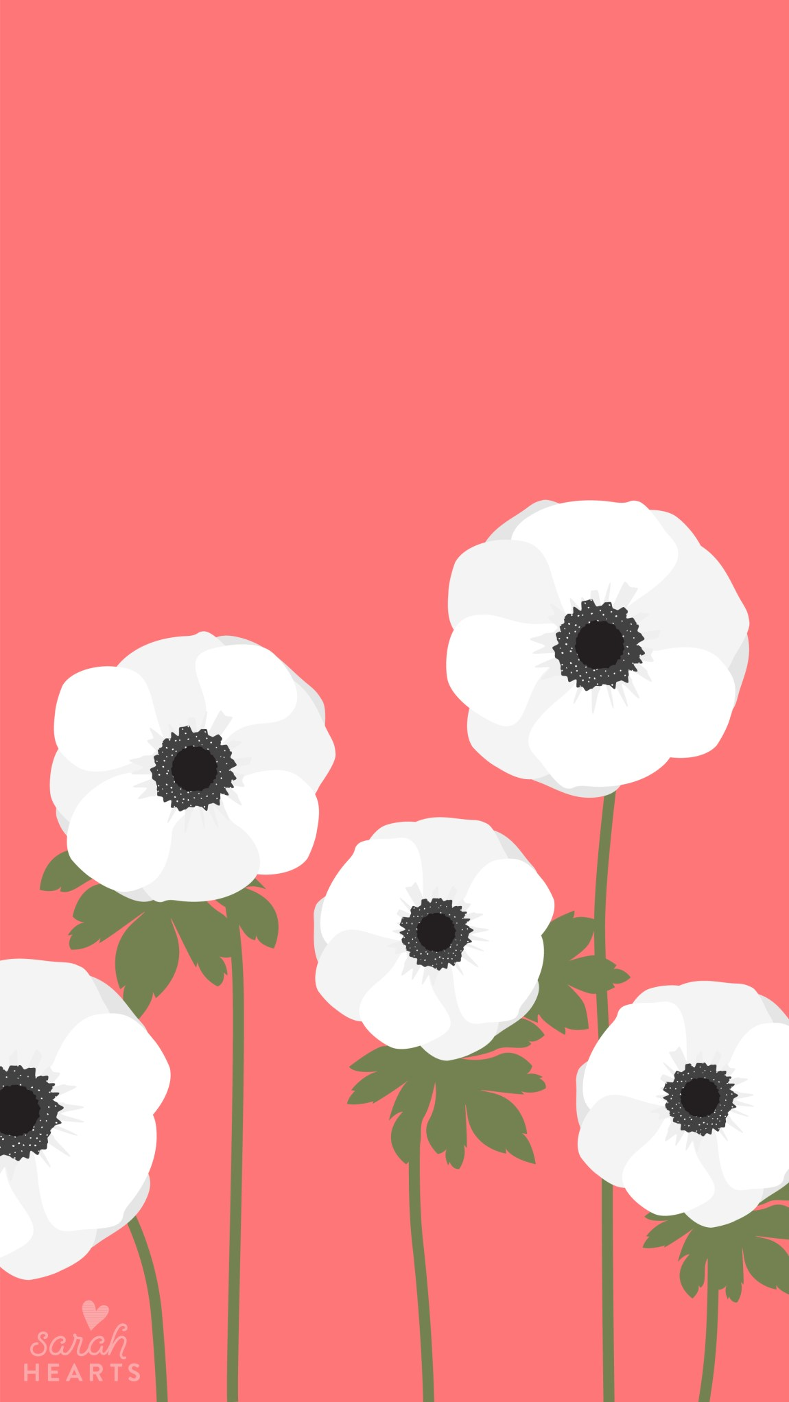 Get ready for spring with this beautiful white anemone wallpaper! Available for phones, tablets and computers.
