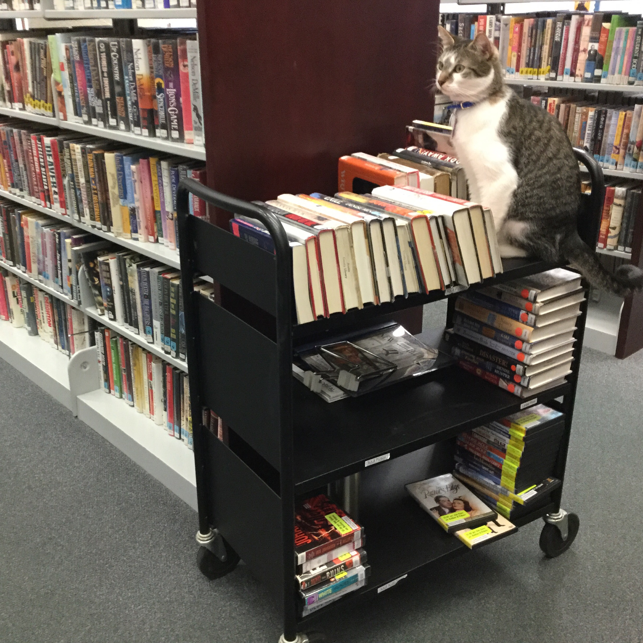 My Most Challenging Library Patron