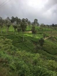 Sri Lanka train tea 2