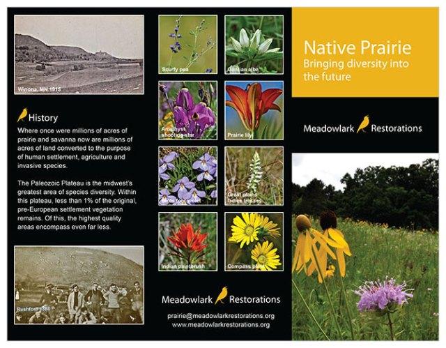 Borchure-Meadowlark-Outside3