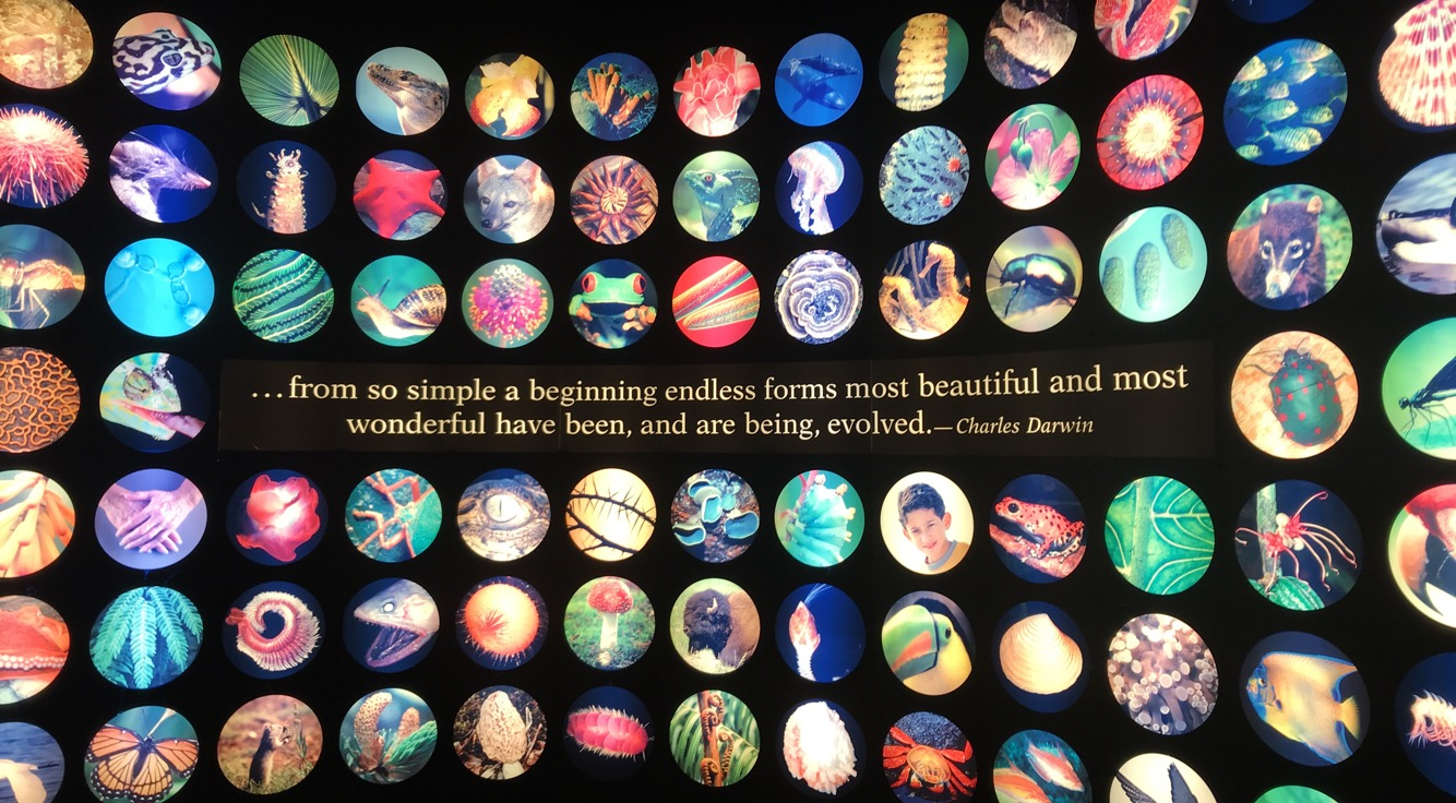 """Quote by Charles Darwin reading: """"from so simple a beginning endless forms most beautiful and most wonderful have been, and are being, evolved."""""""