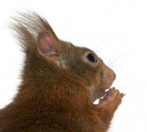 Making Decisions: Are You Smarter than a Squirrel?   sarahkovac.com