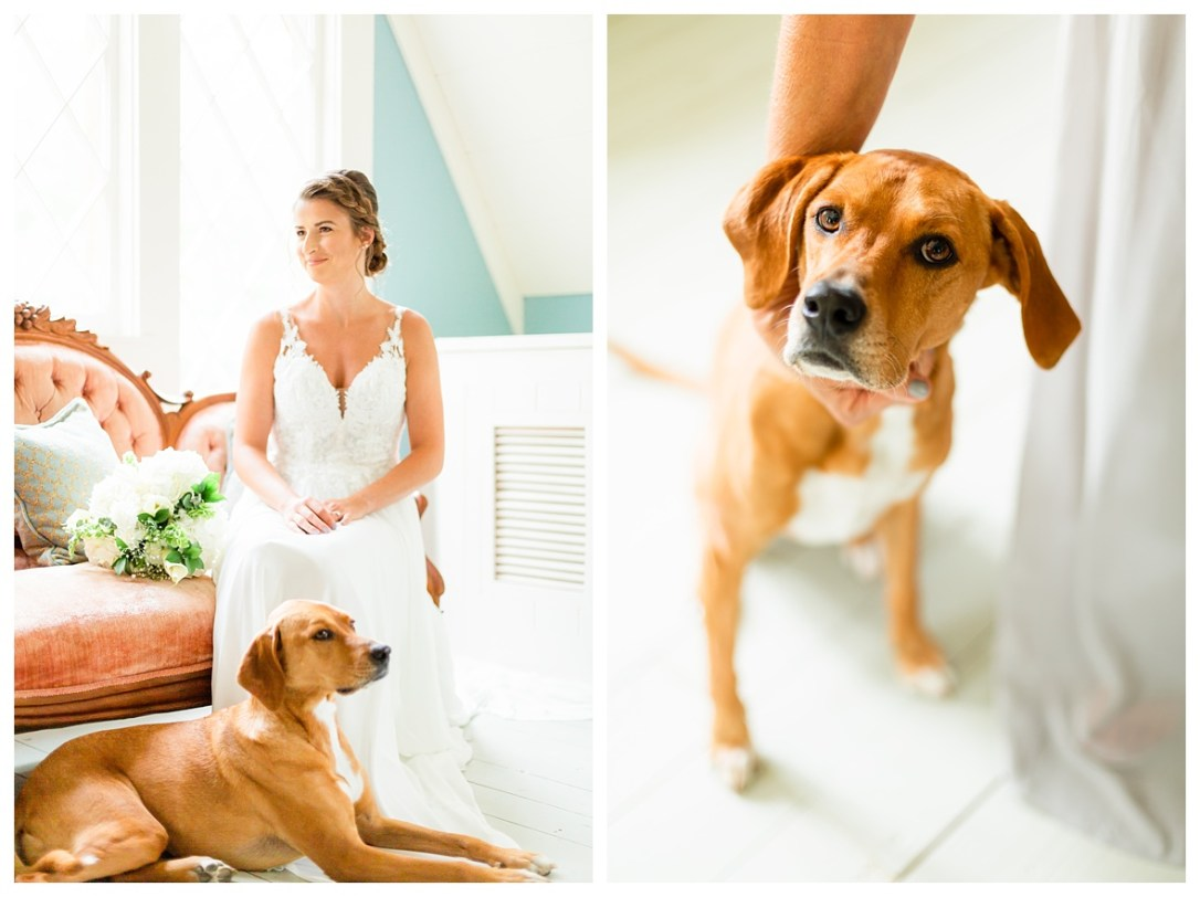 Chattanooga photographer who loves animals with
