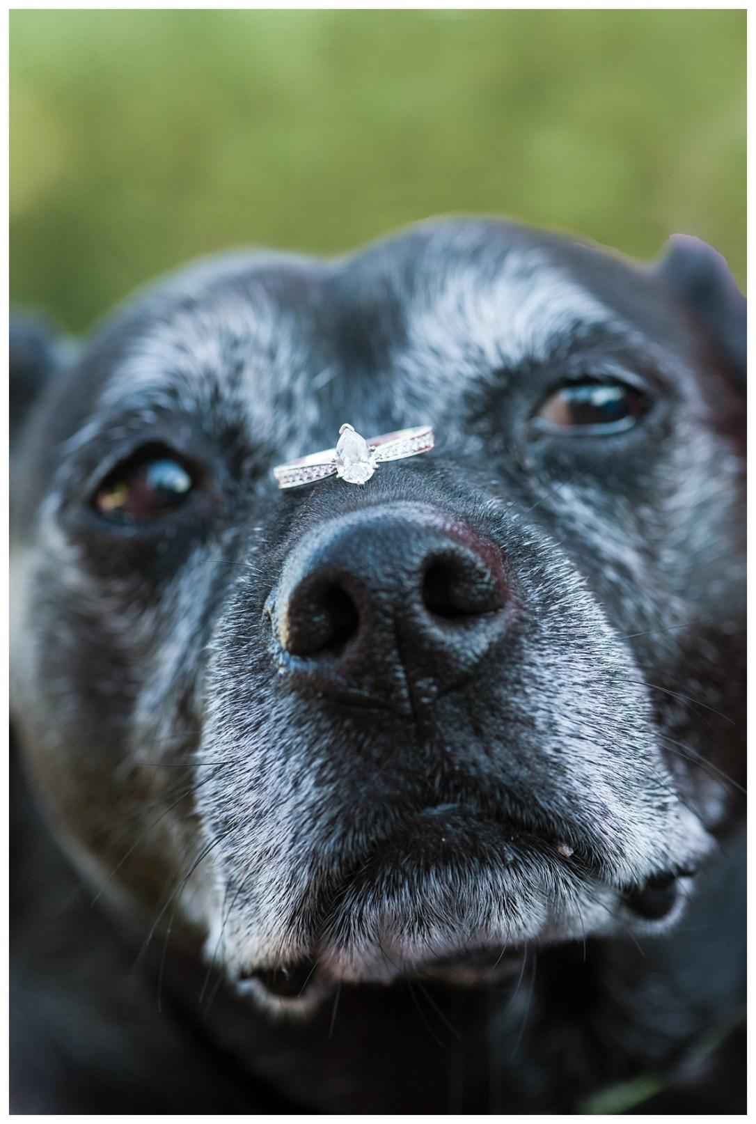 ring on senior dog nose