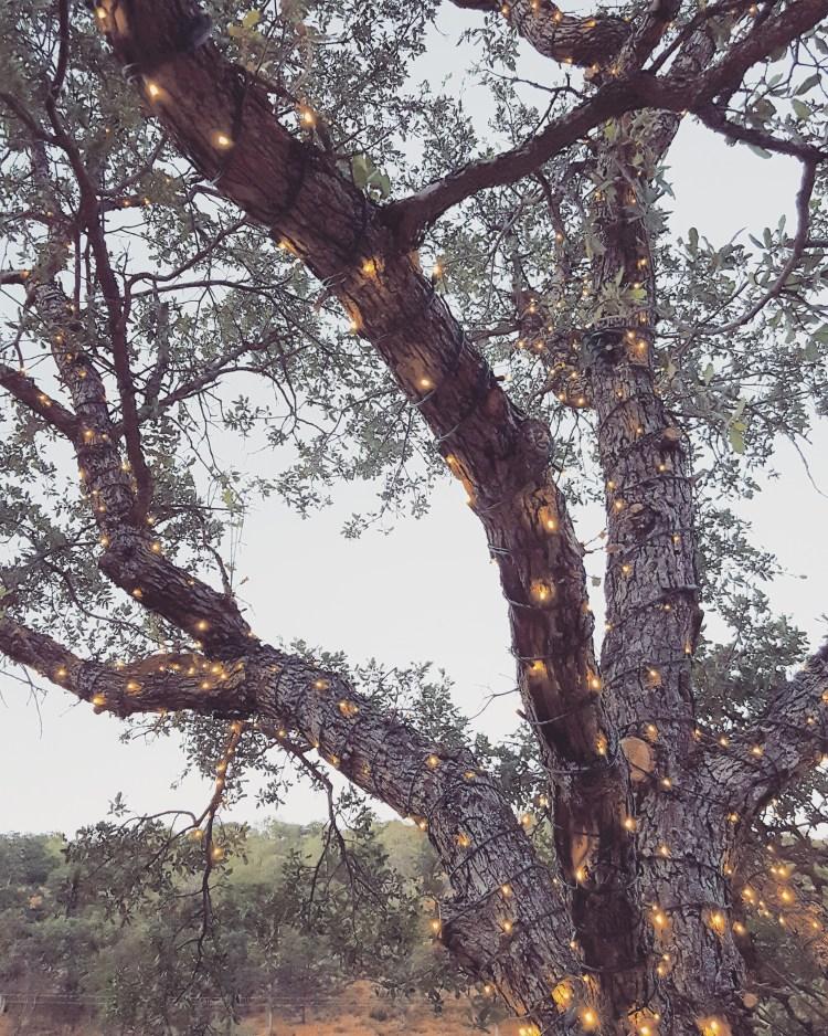 lights-tree-glamping