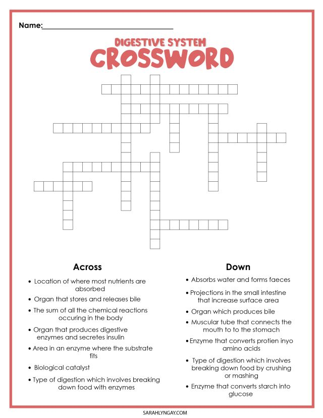 digestive system study crossword puzzle