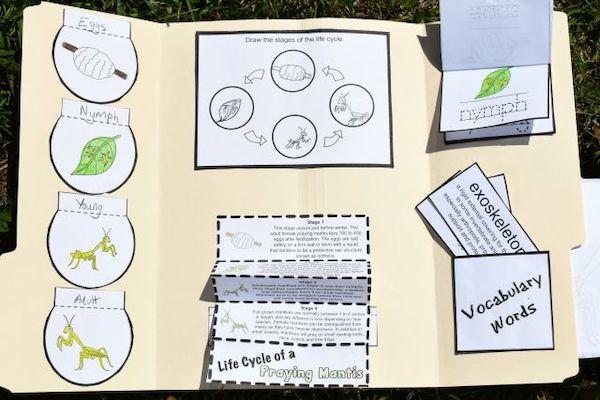 lapbook for the Praying Mantis Lifecycle