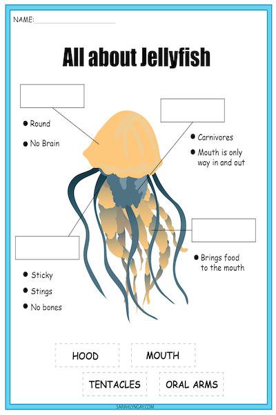 jellyfish diagram