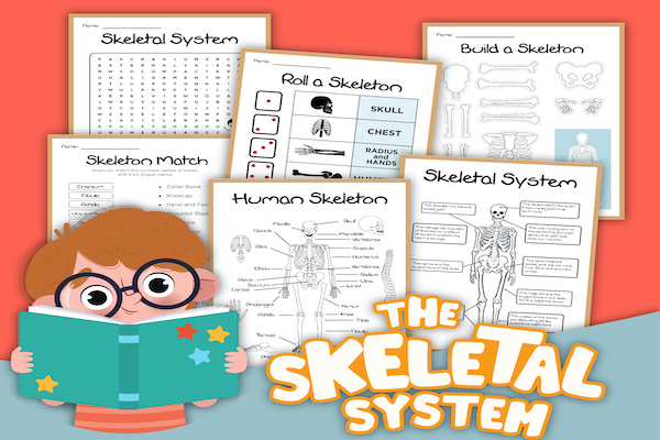 Your Skeleton: A Guide for Kids