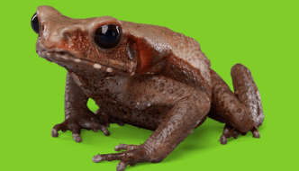 lifesycyle of a frog
