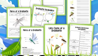 Dragons Fly Too: Help Your Kids Understand the Life Cycle of a Dragonfly