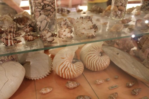 Shells, University of Santo Tomas Museum, Manila, Philippines