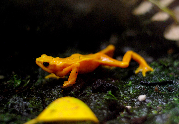 An orange frog spread out across the center of the photo.