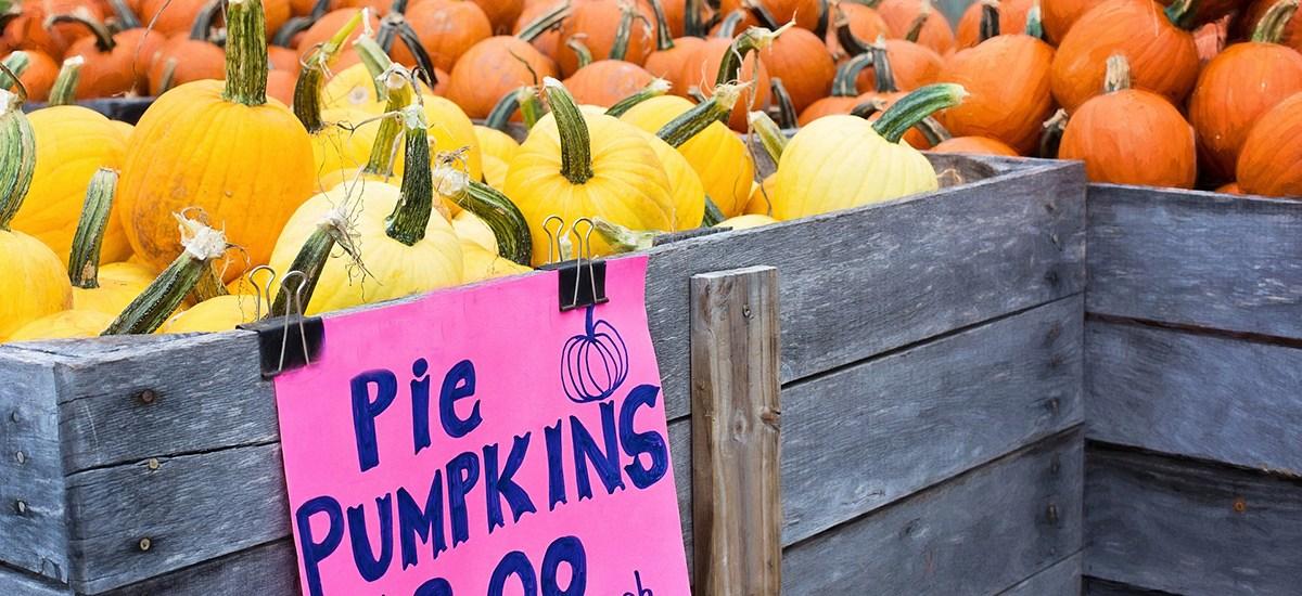 Pumpkin Maple Pie with Fresh Pumpkin
