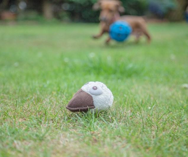 Stuffed duck toy head on grass