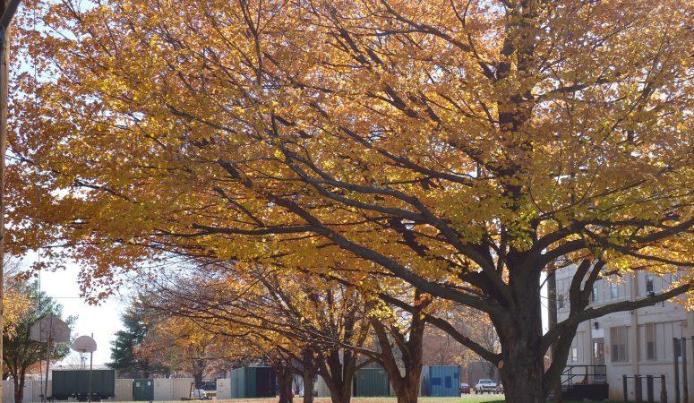 Wordless Wednesday: Fall Beauty