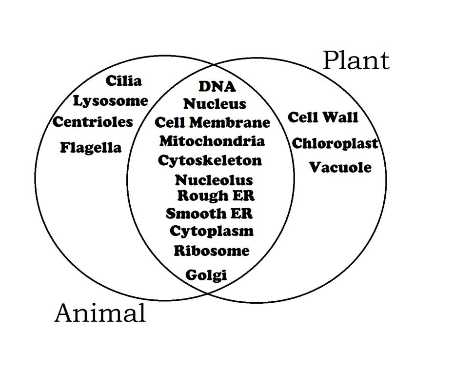 comparing animal and plant cells venn diagram